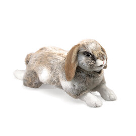 Rabbit Holland Lop(1)