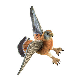 Bird American Kestrel(1)