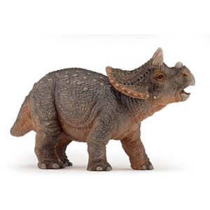 Young triceratops(1)