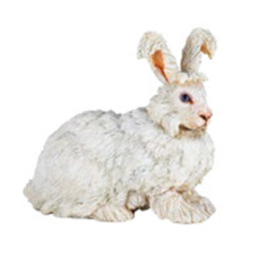 FarmAngora rabbit